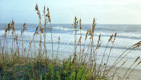 Sea-oats-Outer-Banks