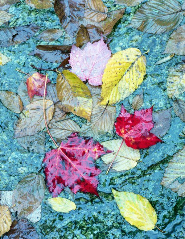 autumn-leaves-crabtree-falls