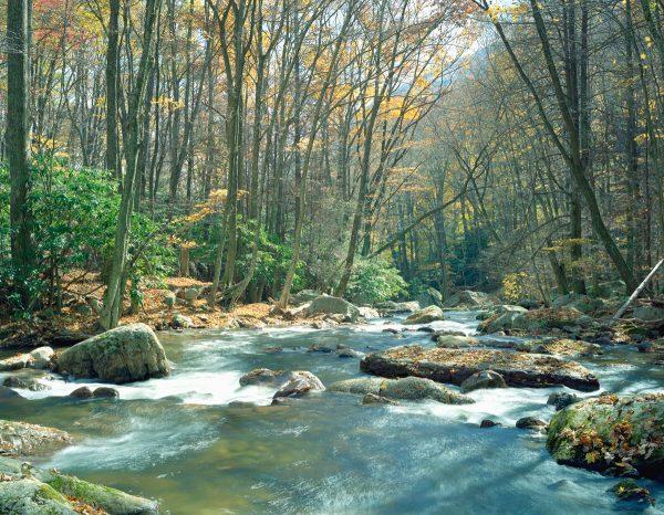 clearday-on-little-stony-creek