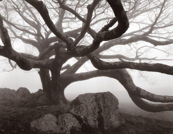 gnarled-tree-rocky-knob