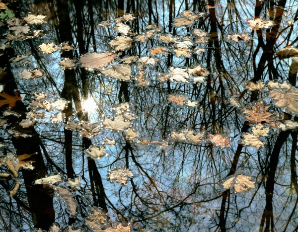 leaves-and-reflections