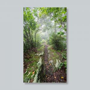 rocky-knob-trail