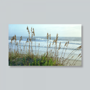 sea-oats-outer-banks